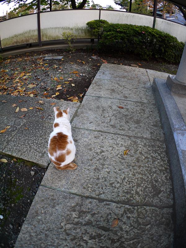 近くに寄って来た白茶猫3