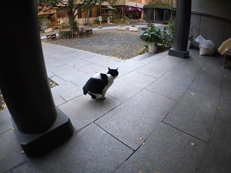 白黒猫の座る姿1