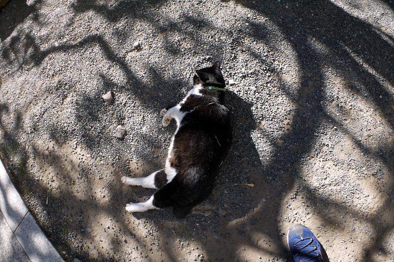 光と影の中で横になってる黒白の猫1
