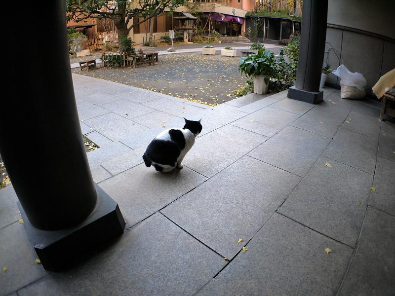 白黒猫の座る姿2