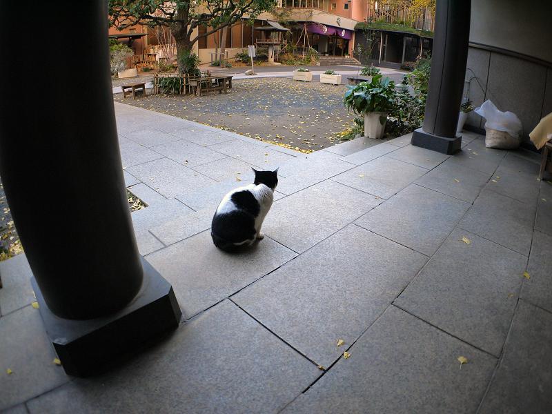 白黒猫の座る姿3