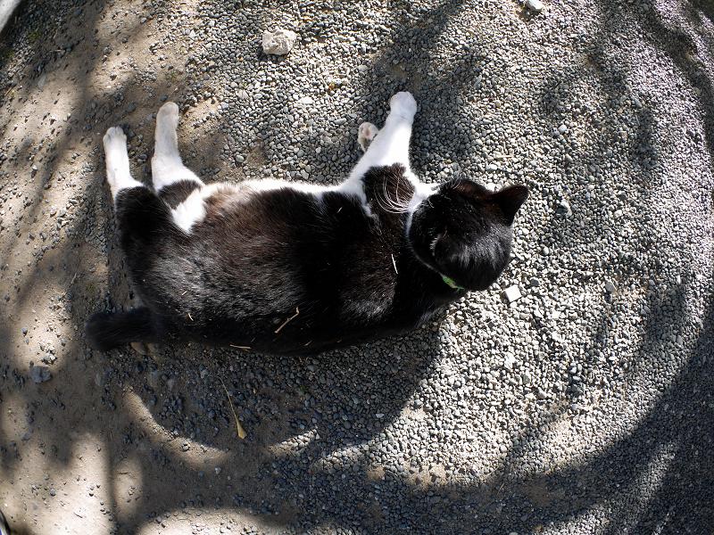 光と影の中で横になってる黒白の猫3