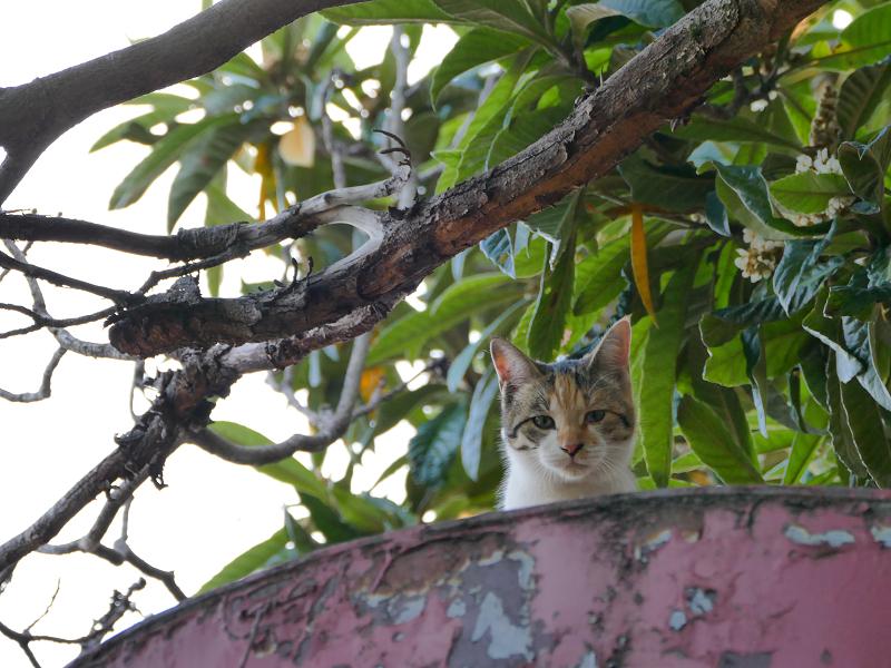 天辺までの登った三毛猫2