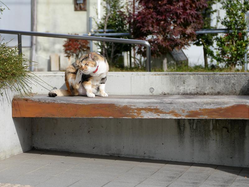 ベンチの上で後ろ足カキカキする三毛猫3