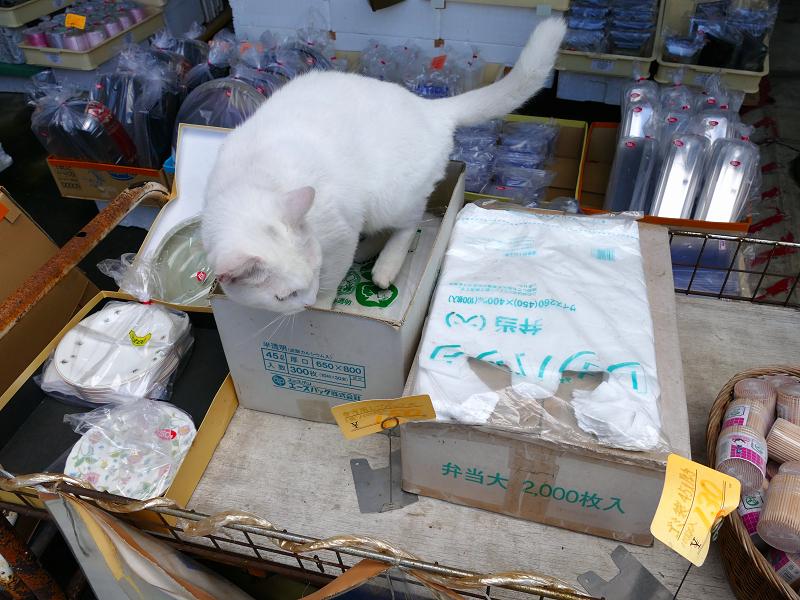 商品の箱と白猫1