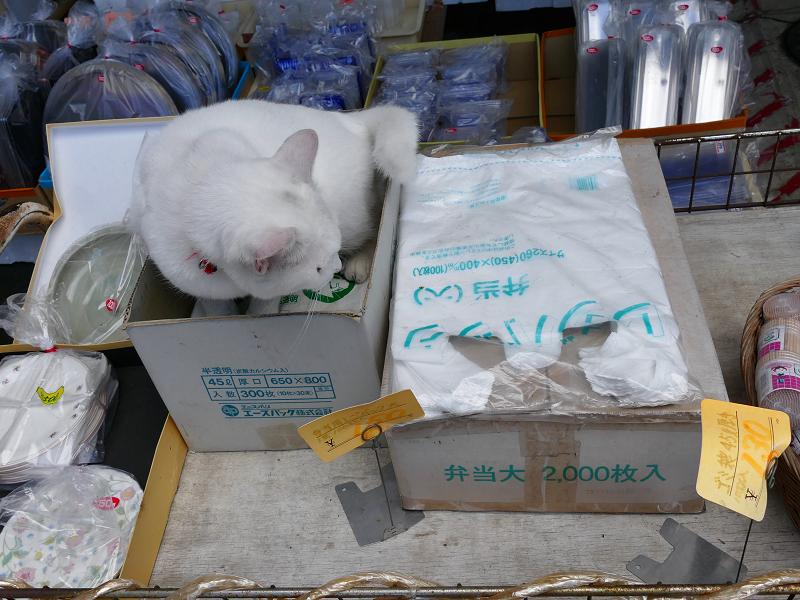 商品の箱と白猫2