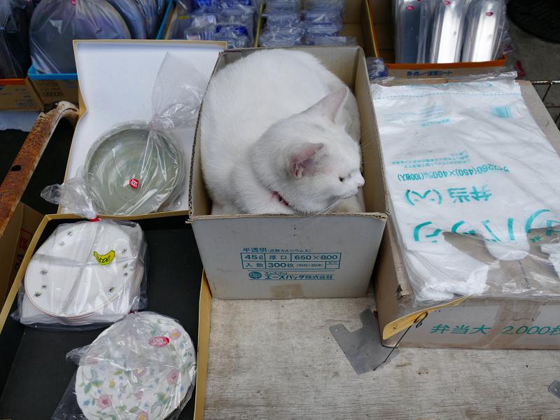商品の箱と白猫3