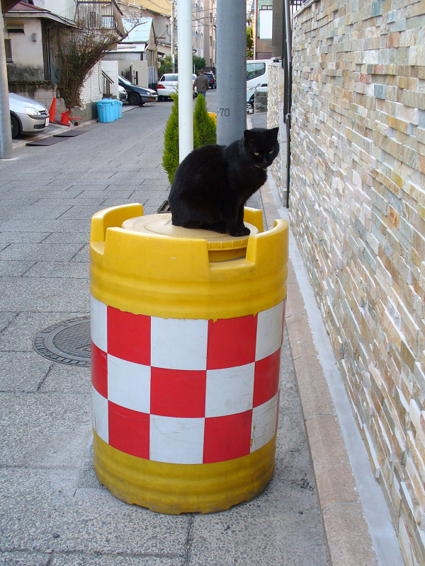 紅白の樽に乗った黒猫