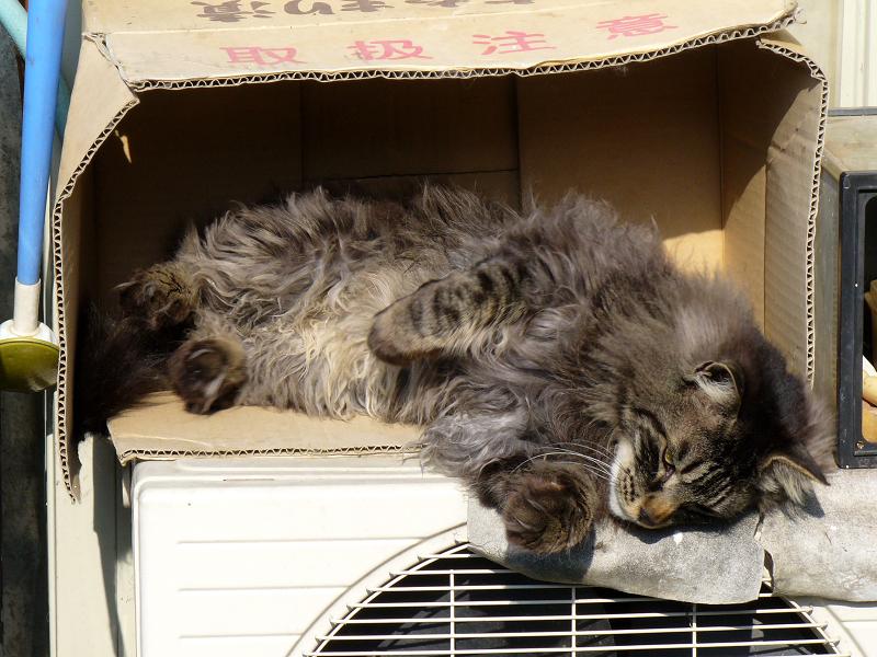 室外機と段ボール毛長の黒猫2