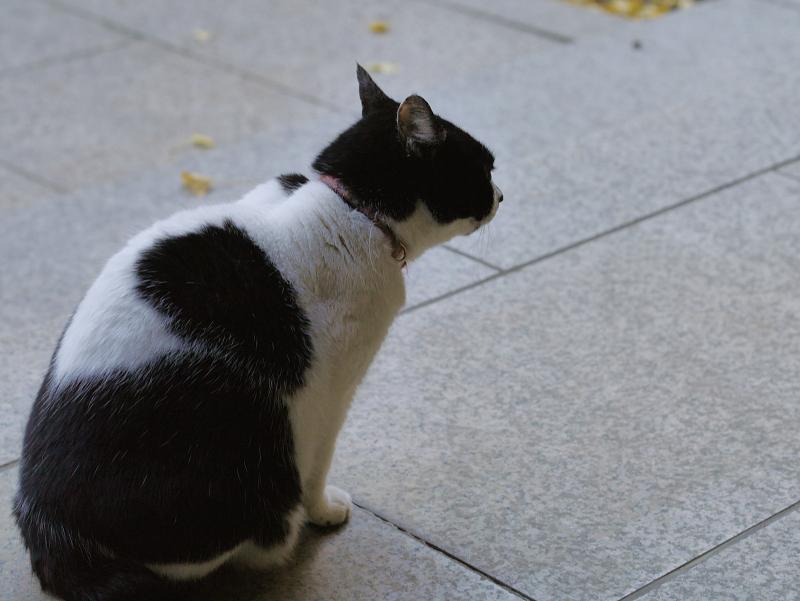 お堂前参道の白黒猫1