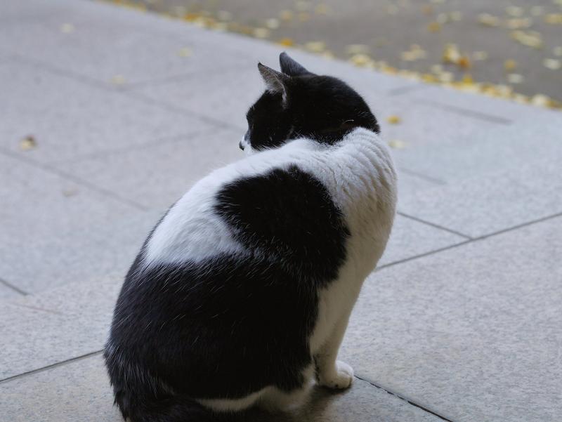 お堂前参道の白黒猫3