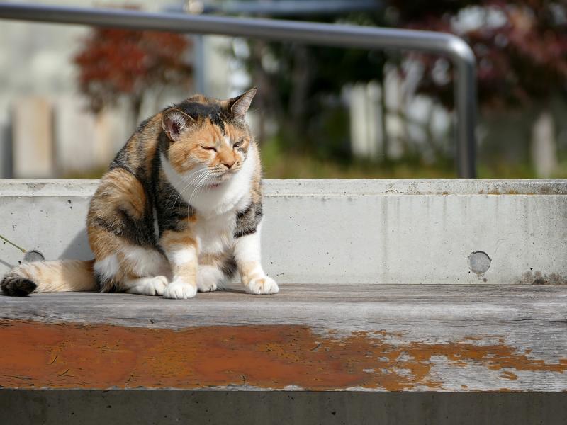 ベンチ上で考える三毛猫2