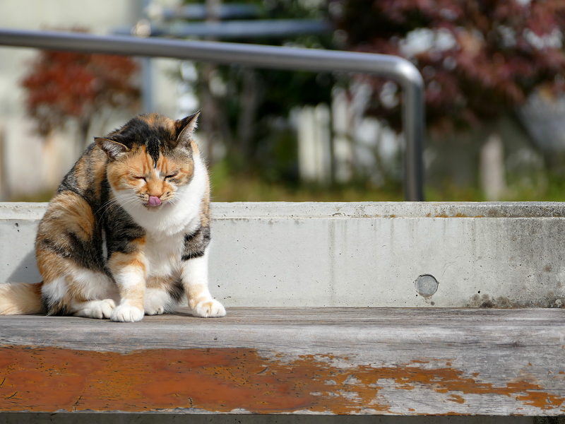 ベンチ上で考える三毛猫3