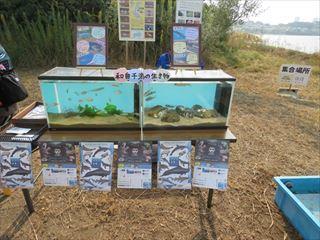 18 魚の展示_R