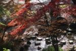 1.芝公園:もみじ谷-07D 1612q