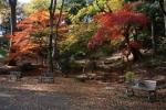 5.芝公園:もみじ谷-26D 1612q
