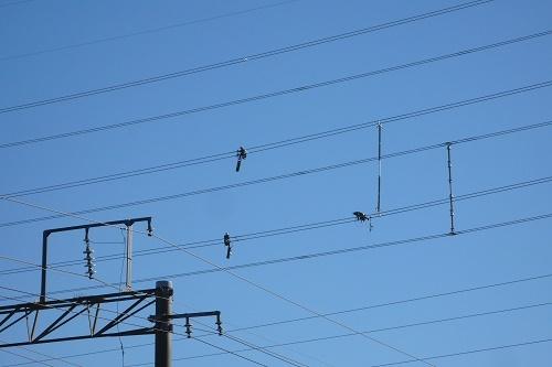 電線マン2