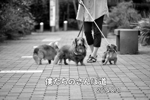 20140831-20181209101.jpg
