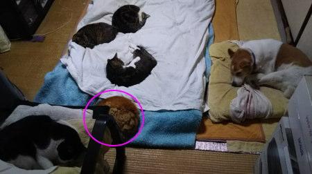 ある日の部屋の様子、猫5匹、犬1匹
