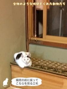 猫窓の前に座ってこちらを見る三毛