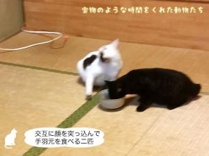 交互に顔を突っ込んで手羽元を食べる二匹