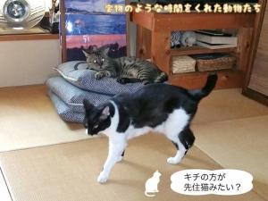 キチの方が先住猫みたい?