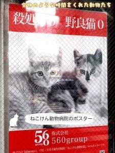 ねこけん動物病院のポスター