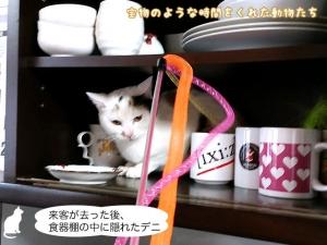 来客が去った後、食器棚の中に隠れたデニ