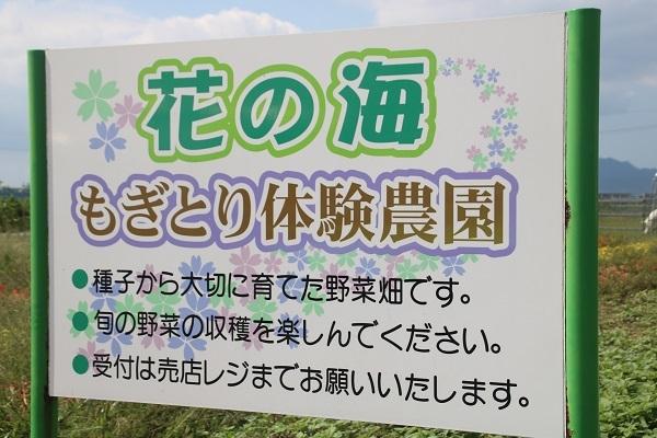 花の海 2018-9-8-1