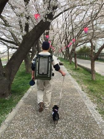 ピルス チタン お散歩。
