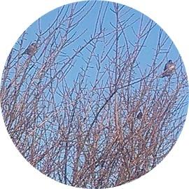 7 木に鳥たち