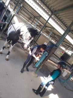 初めての乗馬体験_005