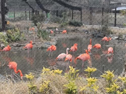 20190126東山動植物園3