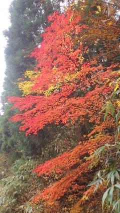 花知ケ仙~泉山 022-001