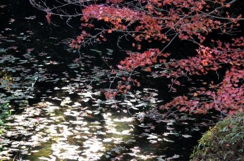 安芸太田町加計・吉水園の紅葉 012-001