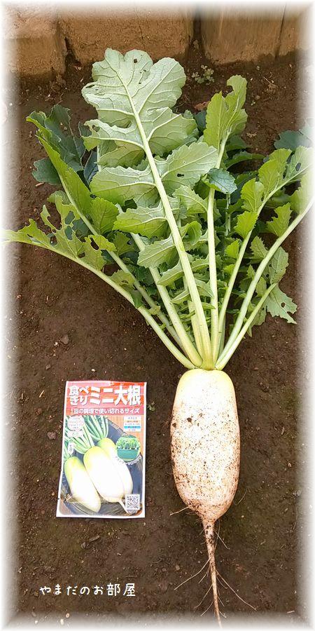 2018.11.21の収穫 ②