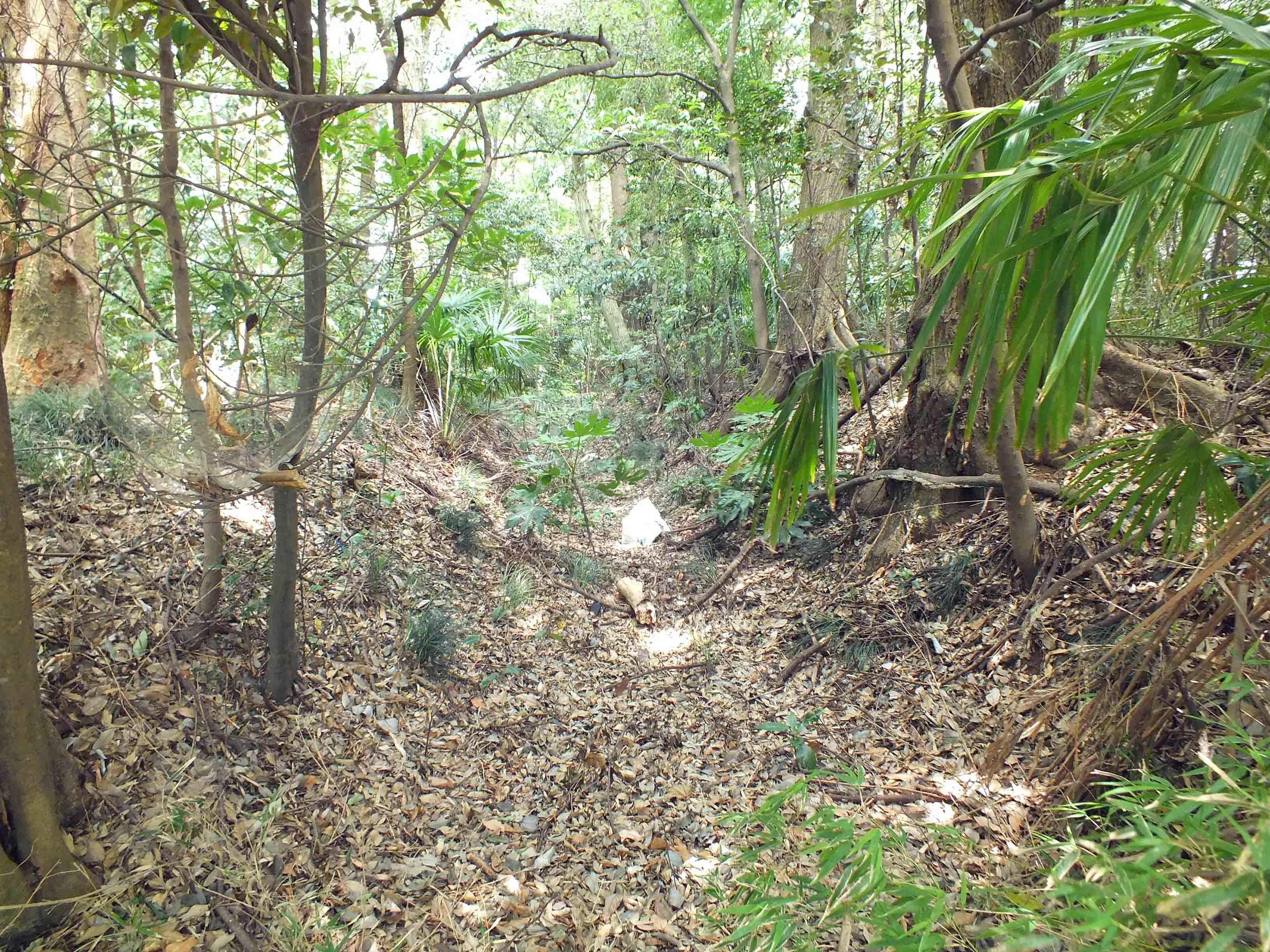 藤ヶ谷城 交差点側の雑木林の中の堀