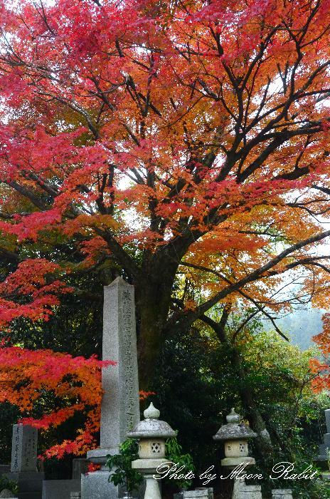 紅葉狩り 西山興隆寺