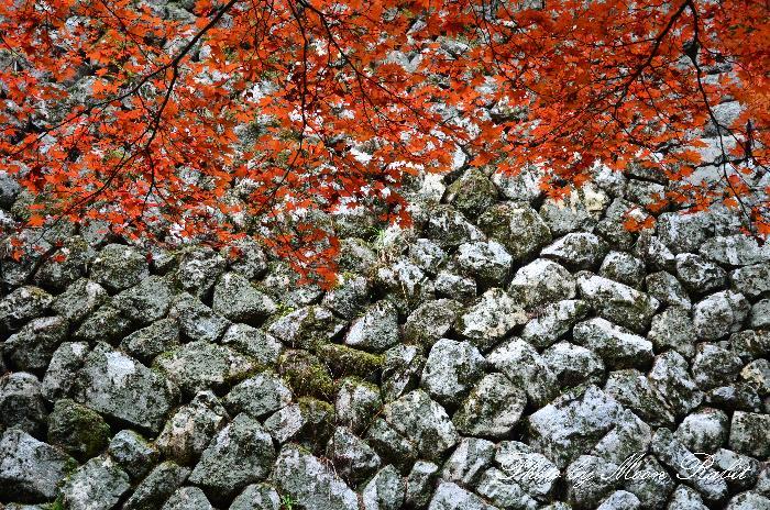 紅葉 西山興隆寺