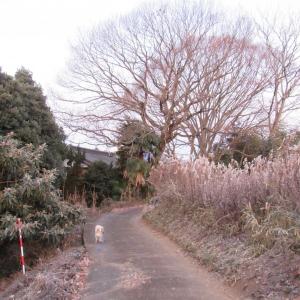 15ある寒朝 (6)