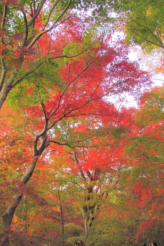 kobayashi181125-101.jpg