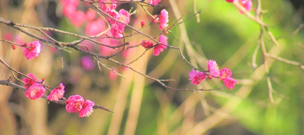 syakujii190127-106.jpg