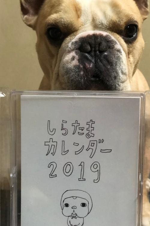 2019_0206_3.jpg