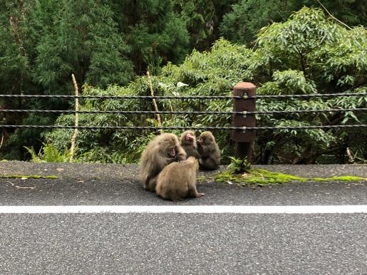 10猿の毛づくろい