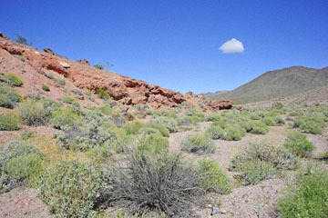 blog 14 Beaty, NV to Death Valley, CA~374W-190E, Corkscrew Peak to Badwater Basin, Volcanic Rocks, CA_DSC7970-3.23.17.jpg