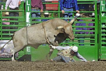 blog (6x4@300) Yoko 76 Livermore, Bull Riding 11, Brady Williams (NS LaGrange, CA)_DSC8133-6.10.17.(3).jpg