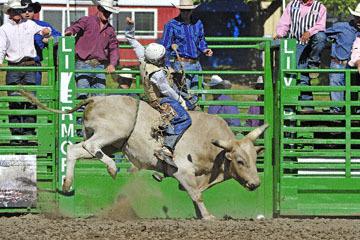 blog (6x4@300) Yoko 76 Livermore, Bull Riding 11, Brady Williams (NS LaGrange, CA)_DSC8120-6.10.17.(3).jpg