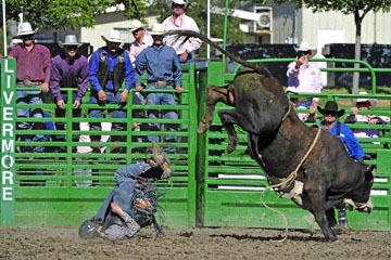 blog (6x4@300) Yoko 76 Livermore, Bull Riding 12, Will Morris (NS Reno, NV)_DSC8161-6.10.17.(3).jpg