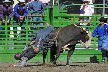 blog (6x4@300) Yoko 76 Livermore, Bull Riding 12, Will Morris (NS Reno, NV)_DSC8159-6.10.17.(3).jpg