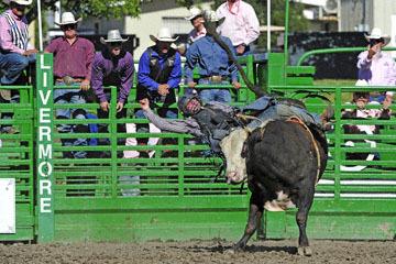 blog (6x4@300) Yoko 76 Livermore, Bull Riding 12, Will Morris (NS Reno, NV)_DSC8158-6.10.17.(3).jpg